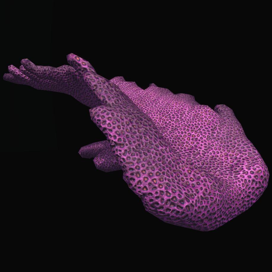 Sunken Coral Branch